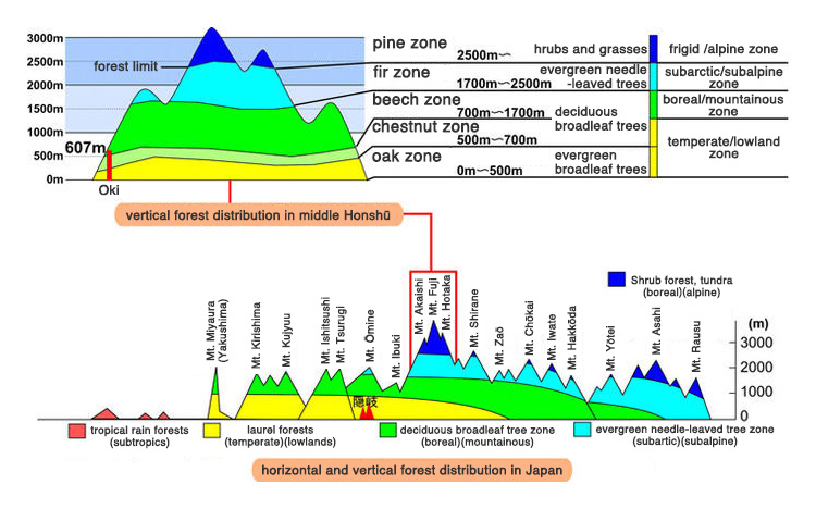 horizontal and vertical forest distribution in Japan